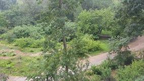 Ulewny deszcz w parku zbiory