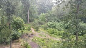 Ulewny deszcz w parku zdjęcie wideo