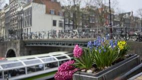 Ulica Amsterdam dekorował obniża zbiory wideo