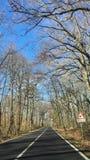 Ulica, drzewa, samochód w ruchu i niebieskie niebo, zbiory