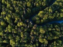 Ulica między wielkimi drzewami od wierzchołka z trutnia widok z lotu ptaka, krajobraz Zdjęcia Royalty Free