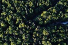 Ulica między wielkimi drzewami od wierzchołka z trutnia widok z lotu ptaka, krajobraz Obrazy Stock