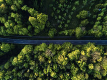 Ulica między wielkimi drzewami od wierzchołka z trutnia widok z lotu ptaka, krajobraz Fotografia Stock