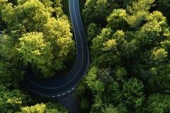 Ulica między wielkimi drzewami od wierzchołka z trutnia widok z lotu ptaka, krajobraz Zdjęcie Royalty Free
