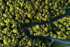 Ulica między wielkimi drzewami od wierzchołka z trutnia widok z lotu ptaka, krajobraz Fotografia Royalty Free