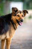 Ulica pies w Burgaz wyspie w Turcja Zdjęcie Stock