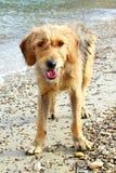 Ulica pies w plaży fotografia royalty free