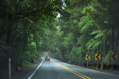 Ulica w pięknym lesie w Nowa Zelandia obrazy stock