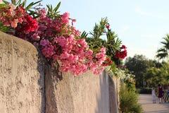 Ulica w Portowym Grimaud obrazy royalty free