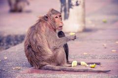 Ulicy małpa na footpath Zdjęcia Stock