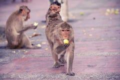 Ulicy małpa na footpath Zdjęcie Royalty Free