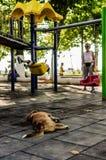 Ulicy Psi lying on the beach Przy dzieciaka ` s boiskiem Zdjęcie Royalty Free
