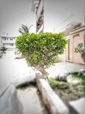 uliczna roślina obraz royalty free