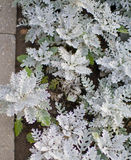 Uliczne rośliny Fotografia Royalty Free