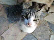 Ulicznego kota przyglądający up Zdjęcia Stock