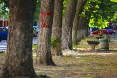 uliczni drzewa Zdjęcie Stock