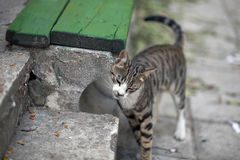 Uliczni koty Grupy uliczni koty Zdjęcie Royalty Free