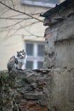 Uliczni koty Grupy uliczni koty Zdjęcia Stock
