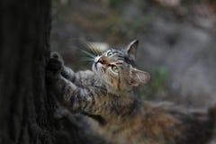Uliczni koty Grupy uliczni koty Zdjęcie Stock