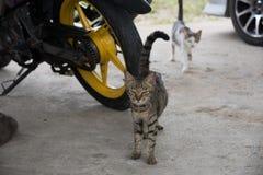 Uliczni koty i rowery zdjęcia stock