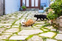 Uliczni koty je jedzenie - pojęcie bezdomni zwierzęta Obraz Royalty Free