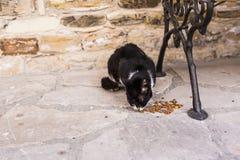 Uliczni koty je jedzenie - pojęcie bezdomni zwierzęta Zdjęcia Royalty Free