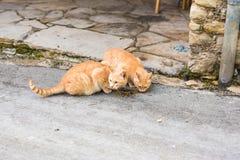 Uliczni koty je jedzenie - pojęcie bezdomni zwierzęta Fotografia Royalty Free