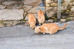 Uliczni koty je jedzenie - pojęcie bezdomni zwierzęta Obraz Stock
