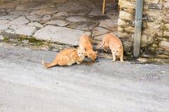 Uliczni koty je jedzenie - pojęcie bezdomni zwierzęta Zdjęcia Stock