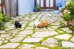 Uliczni koty je jedzenie - pojęcie bezdomni zwierzęta Zdjęcie Royalty Free