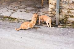 Uliczni koty je jedzenie - pojęcie bezdomni zwierzęta Obrazy Royalty Free