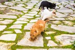 Uliczni koty je jedzenie - pojęcie bezdomni zwierzęta Zdjęcie Stock