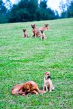 Uliczni psy mogą być przybłąkanymi psami obrazy stock