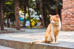 Uliczny czerwony bezdomny kot w jardzie monaster fotografia stock