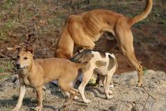 Uliczny dog& x27; s obraz royalty free