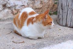 Uliczny kot Zdjęcie Stock