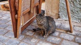 Uliczny kot Zdjęcia Stock