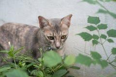 Uliczny kot na cement ścianie Zdjęcie Royalty Free