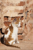Uliczny kot przy Marrakesh Zdjęcia Stock
