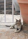 Uliczny kot Relaksujący kot, kot odpoczywa w cieniu, sypialny kot w ulicie na słonecznym dniu, gnuśny kot w ulicznym, gnuśnym koc Zdjęcia Royalty Free