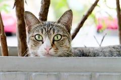 Uliczny kot w Bangkok zdjęcie stock