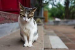 Uliczny kot w Hanoi, Wietnam zdjęcia stock