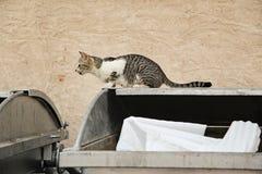 Uliczny kota obsiadanie na koszu Obrazy Royalty Free