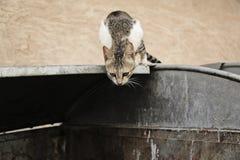 Uliczny kota obsiadanie na koszu Zdjęcie Royalty Free