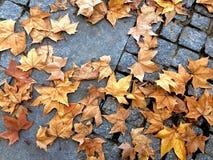 Uliczny podłogowy pełny drzewni liście w jesieni Fotografia Stock