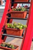 Uliczny wielopoziomowy kwiatu ogród z roślinami w garnkach Zdjęcia Royalty Free