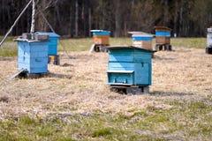 Ulii пчелы стоя в поле стоковое фото rf