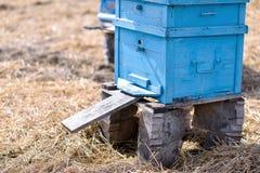 Ulii пчелы стоя в поле стоковые фото
