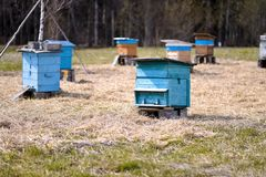 Ulii dell'ape che sta nel campo Fotografia Stock Libera da Diritti