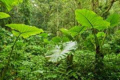ulistnienia lasu deszcz Fotografia Royalty Free